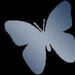 sherrybutterfly